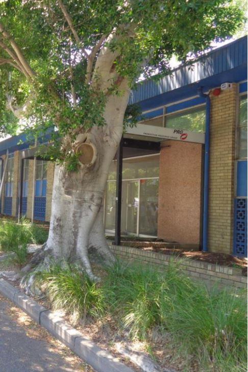 Tree roots Opera Australia building